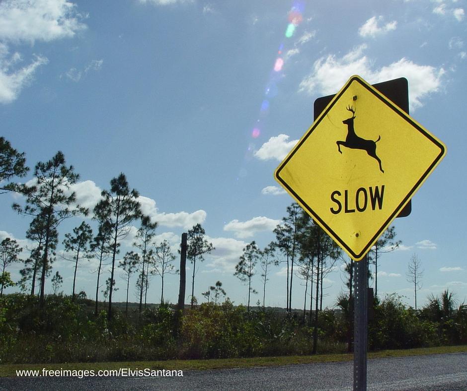 deer-crossing-2-1311494-1280x960